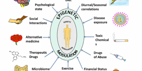A compilation of epigenetic influences on humans. The figure represents a compilation of the various epigenetic influences on humans by different sources present in the environment. While some of these might be beneficial for health and behavior, others might be harmful and interfere with the body and mind creating an imbalance, which might manifest as a disease or psychological disorder. Some of the beneficial influences listed are exercise, microbiome (beneficial intestinal bacteria), and alternative medicine whereas harmful influences include exposure to toxic chemicals and drugs of abuse. Factors such as diet, seasonal changes, financial status, psychological state, social interactions, therapeutic drugs, and disease exposure might have beneficial or harmful effects depending on the specific nature of the influence. The environment thus complements and shapes human health. With the help of extended research in the field, we might be able to steer these influences in a positive way. This is partly due to fertility regeneration processes resulting from our body's ability to regenerate most of it's own cells.